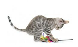 Список игрушек для кота