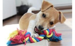 Игрушки для щенка. Как выбрать?