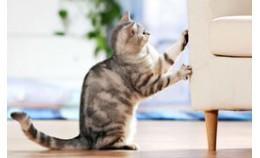 Как спасти дом от кошачьих когтей?
