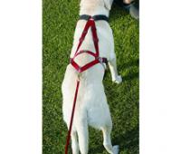Шлейка для ездовых собак (скиджоринг, каникросс, упряжки санях)