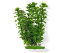 Растение пластиковое зеленое Амбулия 13 см