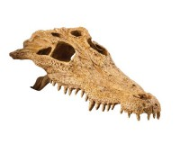 Убежище-декор Череп крокодила для террариума