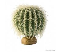 Растение пустыни, Кактус-бочонок средний