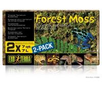 Растение Terra forest plume moss